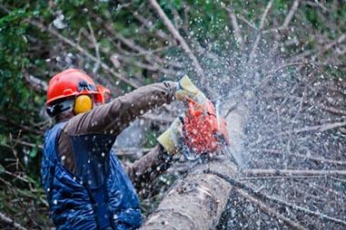 PADRAMONT j.d.o.o., Rušenje drveća